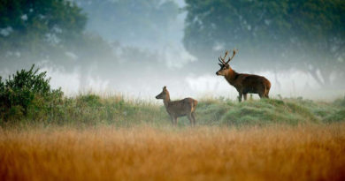 """Deer culling in Richmond Park: brutal slaughter or necessary reality?"""