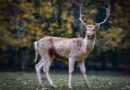Over 120,000 Britons sign petition against animal culling in the Royal Parks